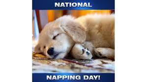 dog napping