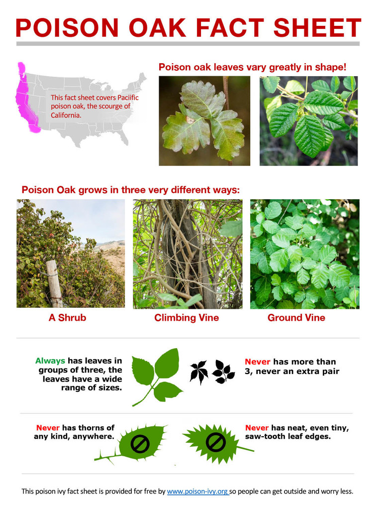 Poison Oak Fact Sheet